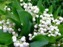 """When it comes to seasonal scents, for many people """"spring"""" can be summed up by one flower: lily of the valley. This dainty blossom has an appearance and ..."""