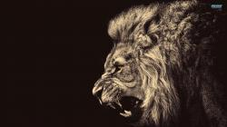 Lion Wallpaper image Photos Wallpaper HD 261 Backgrounds
