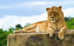 Lion sit Rock