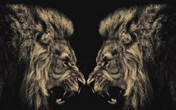 HD Wallpaper   Background ID:413249. 1920x1200 Animal Lion