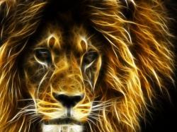 Another Lion lion wallpaper