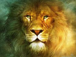 Beautiful Lions Desktop Wallpaper