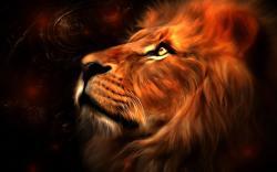 lions wallpaper 14 Desktop Wallpapers