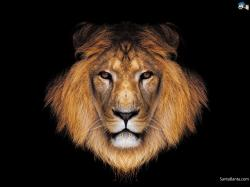 lions wallpaper 14 Cool Backgrounds