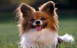 Little Dogs Cute Picture - Download Wallpaper