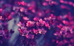 Little Flowers HD wallpapers