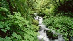 Forest Little Stream Wallpaper