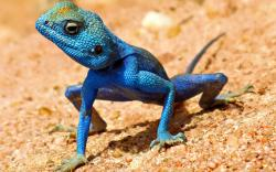 Lizard- Photo#08