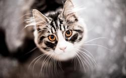 Look Cat Animal HD Wallpaper