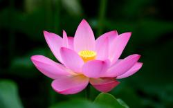 The lotus is a spiritual symbol in many religions and cultures, and some of its meanings signify spiritual development, creation, purity and rebirth.