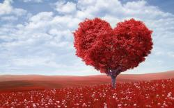 ... Love Wallpaper ...
