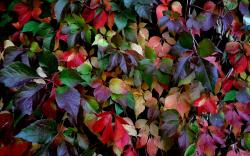 Lovely Colorful Leaves