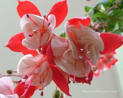 lovely! - flowers Wallpaper