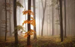 Lovely Fog Wallpaper 36644 1920x1200 px