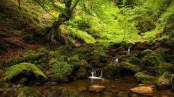 Lovely Forest Stream Wallpaper