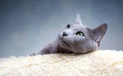 Lovely grey cat