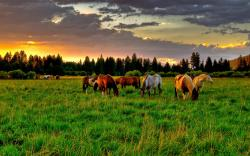 """Download the following Lovely Horse Wallpaper 1322 by clicking the button positioned underneath the """"Download Wallpaper"""" section."""