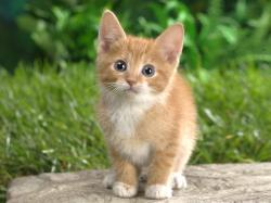 Lovely kitten picture