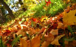 Lovely Leaves Wallpaper