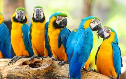 Lovely macaw parrots