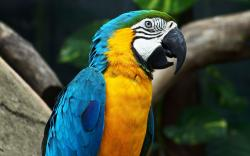 Lovely Macaw Parrot