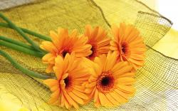 Lovely Orange Flowers Wallpaper