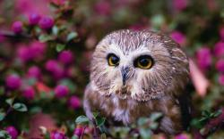 Lovely owl eyes