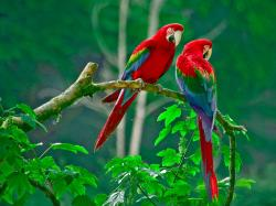 Description: The Wallpaper above is Lovely parrots Wallpaper in Resolution 1600x1200. Choose your Resolution and Download Lovely parrots Wallpaper