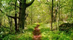 Lovely Path 29651 1920x1440 px. Category: Landscape Resolution: 1920x1440px. Filesize: 808.52 KB. Stunning Sunlight Wallpaper 6134