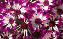 Lovely Purple Flowers Wallpaper 10354