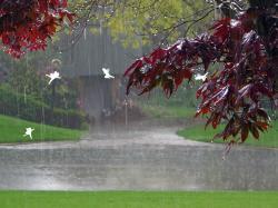 Lovely Rainy Day Wallpaper 14944