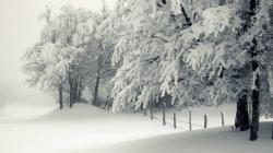 Lovely Snowy Trees Wallpaper