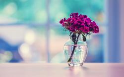 purple flowers glass vase water table wide hd wallpaper is a lovely background.