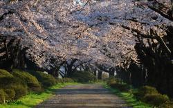 Lovely Trees Wallpaper 12658