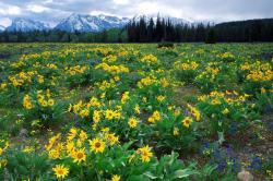 Lovely Wildflower Wallpaper 37113 1920x1080 px