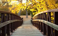 Lovely Wooden Path Wallpaper