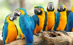 Macaw Parrot<br ...