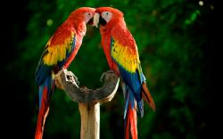 Cute Macaw Wallpaper ...