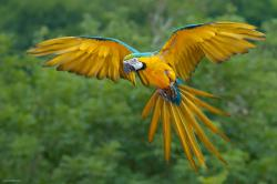 ... Macaw Wallpaper ...
