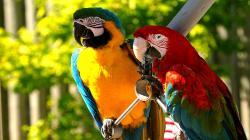 HD Wallpaper | Background ID:449413. 1920x1080 Animal Macaw