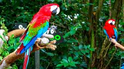 Animal - Red-and-green Macaw Wallpaper