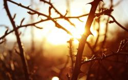 Macro Branches Trees Sunset Nature