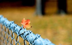 Macro Fence Leaf Autumn