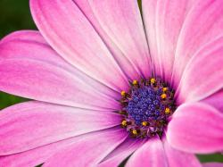 Macro flower photography