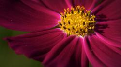 Macro Flower Wallpaper