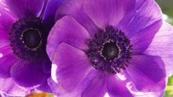 Wallpapers flower petals purple macro flowers archives Flower HD Wallpaper 1920x1080 px