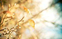 Macro Leaves Yellow Branch Tree Autumn