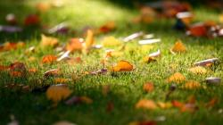 Nature Leaves Grass Artwork Macro Depth Of Field Fallen Leaves Fresh New Hd Wallpaper