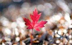 Macro Leaf Shape Bokeh