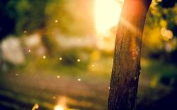 Macro Tree Sun Rays Bokeh